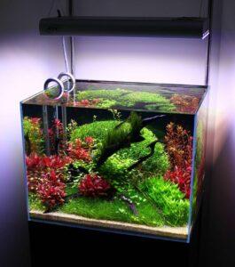 Открытый аквариум